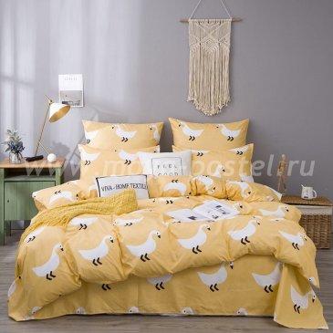 Постельное белье Модное на резинке CLR056 в интернет-магазине Моя постель