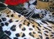 Постельное белье 3D D037 (семейное, 70*70) в интернет-магазине Моя постель - Фото 2